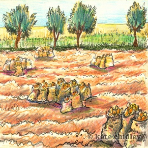 Potatoe fields